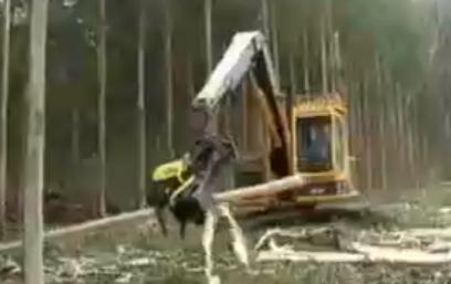 Vídeo de colheita mecanizada floresta